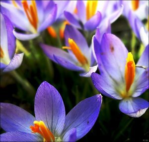 spring_by_libelle